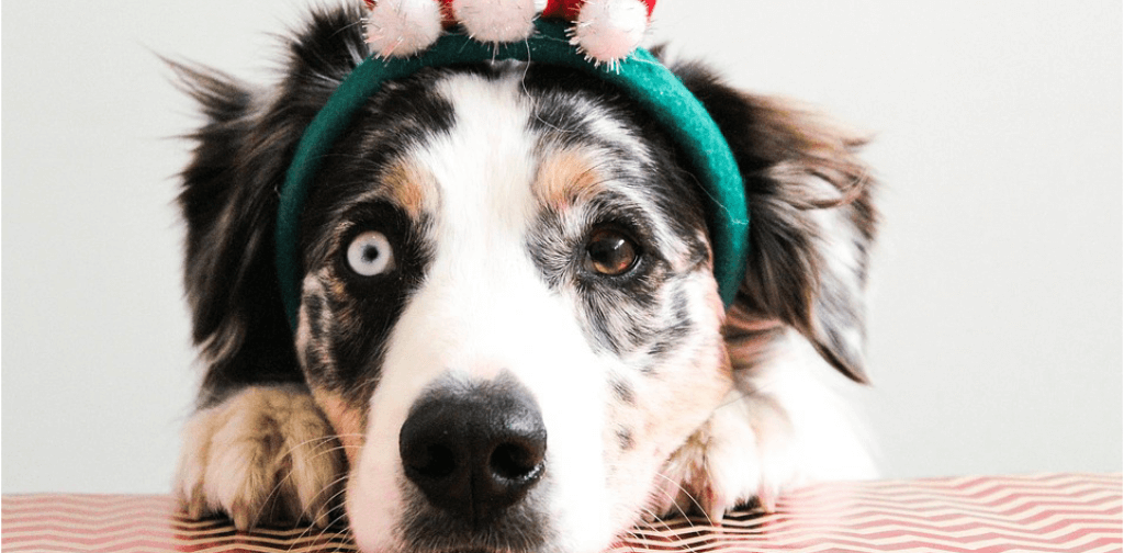 The-Ultimate-Guide-to-Avoiding-Holiday-Hazards-for-Your-Dog.pdf
