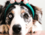 Ultimate Guide to Avoiding Potential Holiday Hazards for Your Dog
