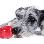 10 Project Toys to Keep Your Dog Busy During Thanksgiving Dinner (or Anytime Your Dog is Bored)
