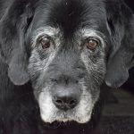 How to Provide the Best Care for Your Senior Dog