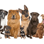 What Can a Dog DNA Test Tell You About Your Dog?