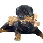 FDA Warns Bone Treats May Be Deadly for Your Dog