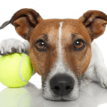 [FREE DOWNLOAD] How to Choose the Best Dog Daycare for Your Puppy or Dog