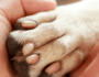 What to Do If Your Dog Has Cracked Paw Pads