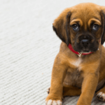 20 Uncomplicated Do's and Don'ts for House Training Your New Puppy or Dog