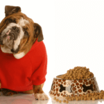 8 Trustworthy Tips for Selecting the Right Dog Food