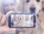New Google Photo App Adds Fun for Dog Lovers