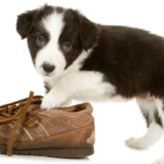 How to Curb Unwanted Chewing in Puppies