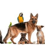 April is National Prevention of Cruelty to Animals Month