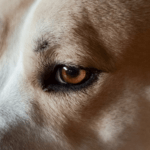 20 Early Warning Signs of Canine Cancer