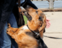 5 Steps to Keep Your Puppy or Dog from Jumping Up