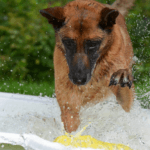 6 Tips to Protect Your Dog from Summer Heat