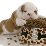 Should You Feed Your Puppy Adult Dog Food?