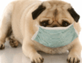How to Know if Your Dog Has Allergies and What To Do About It