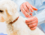 Immunizations and Your Dog – What You Need to Know