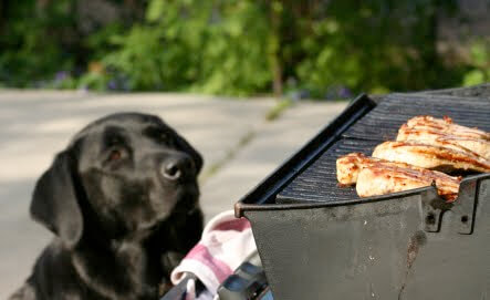 grill dangerous for dogs