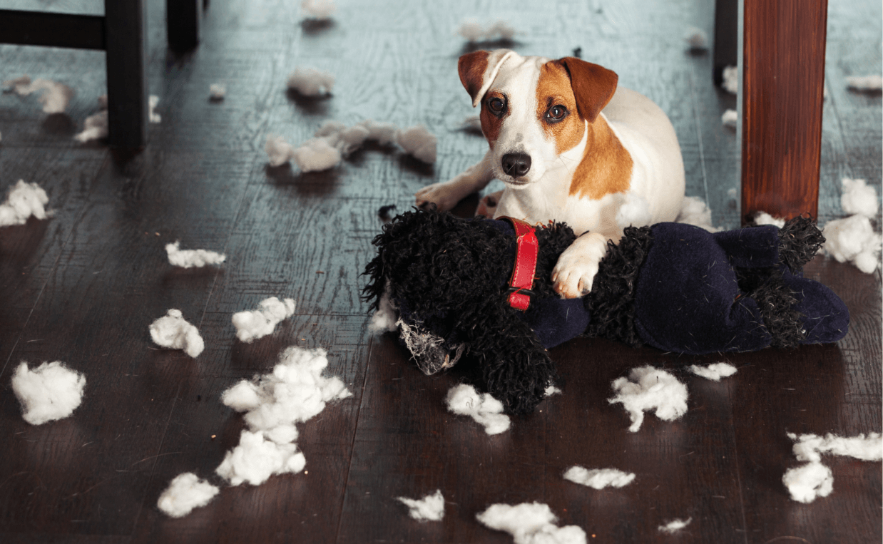 puppy tore up stuffed toy