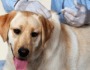 15 Things Every Dog Owner Should Know About Rabies