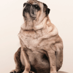 5 Tips for Preventing Obesity in Your Dog