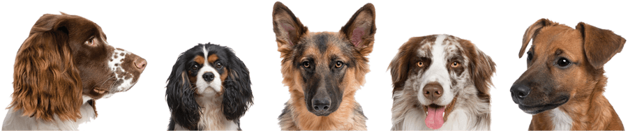 Dog Daycare & Dog Boarding - Colorado Springs - Canine Campus