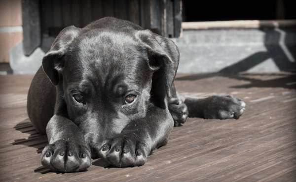 What Everyone Should Know About Puppy Mills