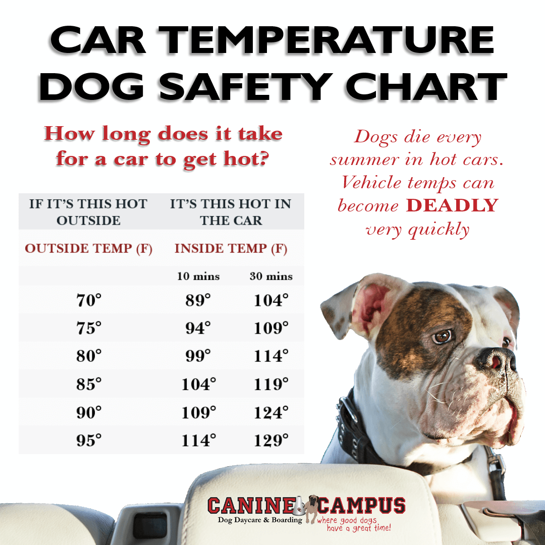 When Is It OK To Leave Your Dog In The Car?