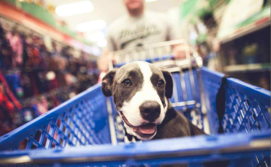 110 Dog Friendly Places to Shop in Colorado Springs - Canine Campus