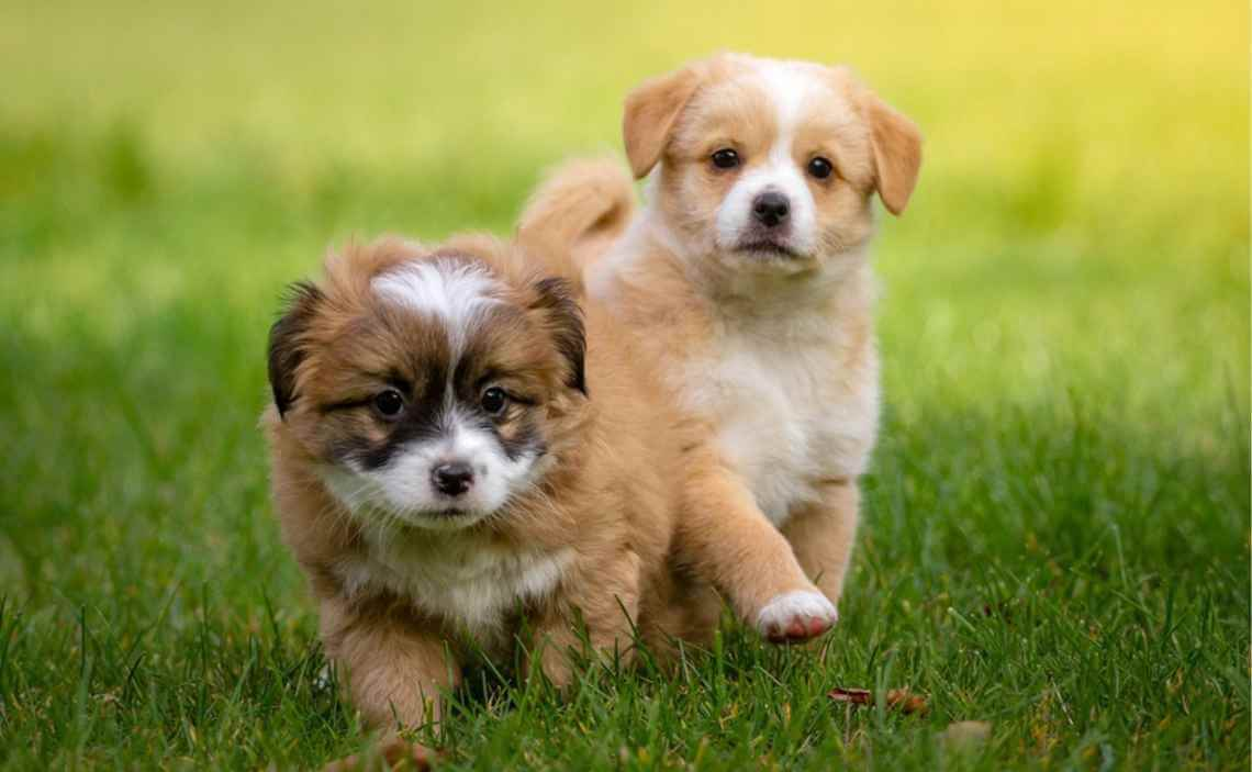 Top Dog Names Of 2018 Canine Campus Dog Daycare Boarding