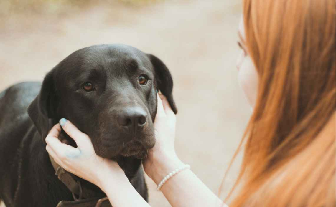 What You Need To Know About Pain Medication For Dogs
