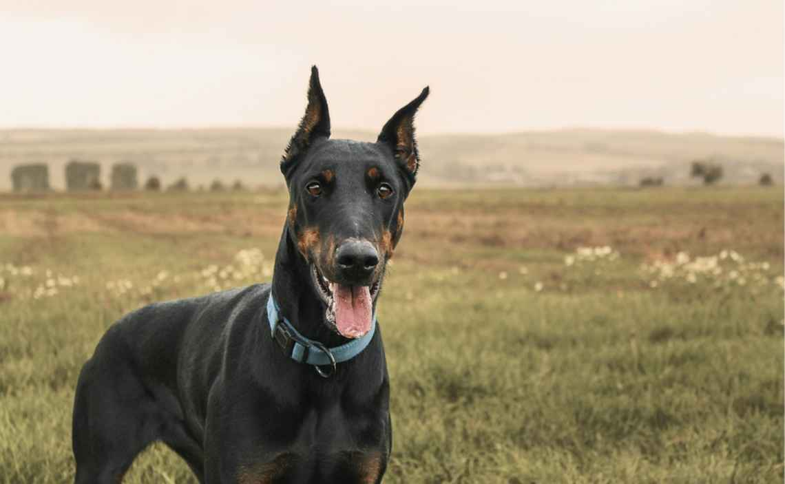 Find Rental Housing For You And Your Dog Canine Campus